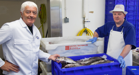 All the fresh fish supplied by Argofish to Anstruther Fish Bar and Restaurant is expertly hand-filleted in the traditional way.